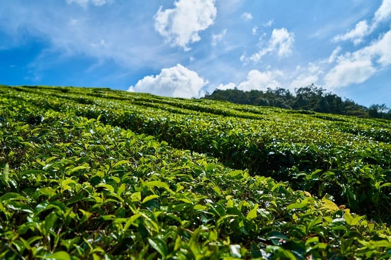 Tea City Of India Dibrugarh In Hindi