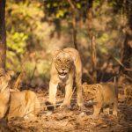 मुकुंदरा हिल्स नेशनल पार्क घूमने की जानकारी - Mukundara Hills National Park In Hindi