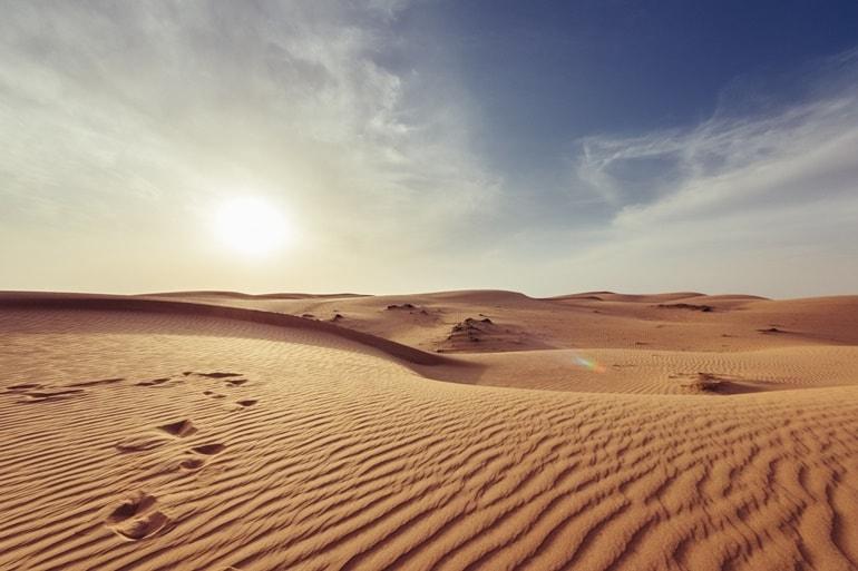 Thar Desert Fauna In Hindi