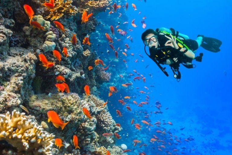 Why Is Pondicherry An Amazing Tourist Destination In Hindi