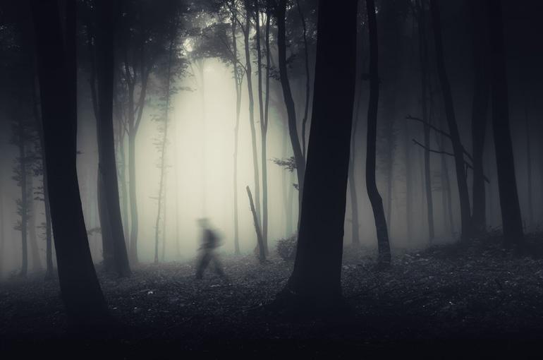 दिल्ली में घूमने के लिए डरावनी जगह संजय वन – Delhi Me Ghumne Ke Liye Darwani Jagah Sanjay Van In Hindi
