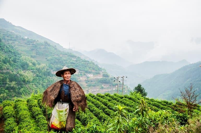 Siliguri Ke Aakarshan Sthal Dhura Tea Garden In Hindi