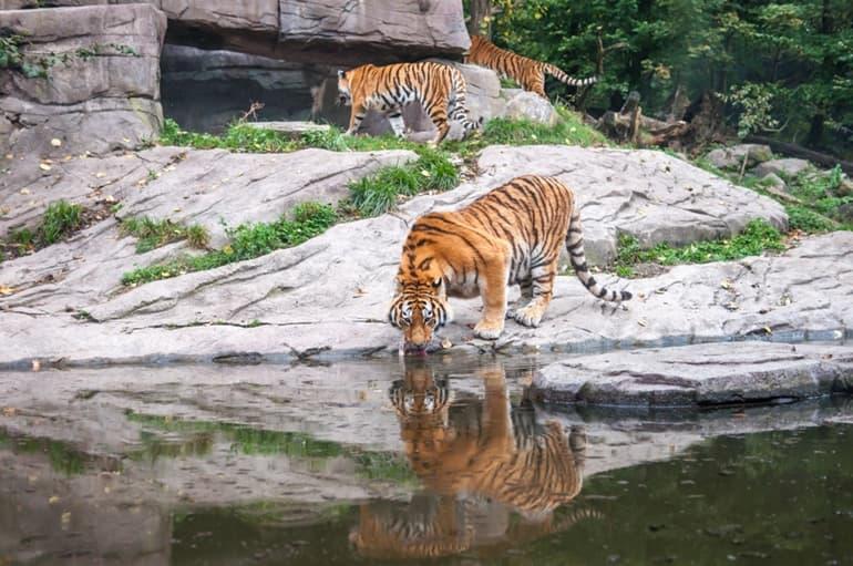 सिलीगुड़ी में घूमने लायक जगह बंगाल सफारी पार्क