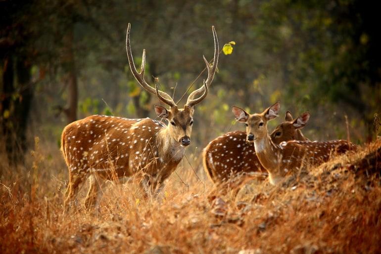 श्रीनगर का मशहूर वन्यजीव अभयारण्यदाचीगाम राष्ट्रीय उद्यान घूमने की पूरी जानकारी - Complete information about visiting Dachigam National Park In Hindi