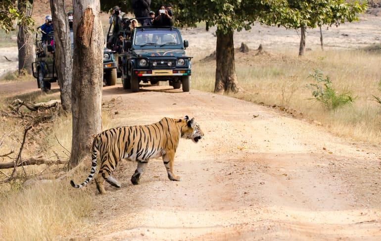 उत्तर प्रदेश के प्रमुख राष्ट्रीय उद्यान और पक्षी अभयारण्य - Major National Parks of Uttar Pradesh In Hindi
