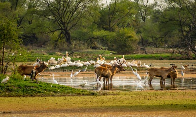 खीरगंगा राष्ट्रीय उद्यान घूमने की जानकारी – Khirganga National Park In Hindi