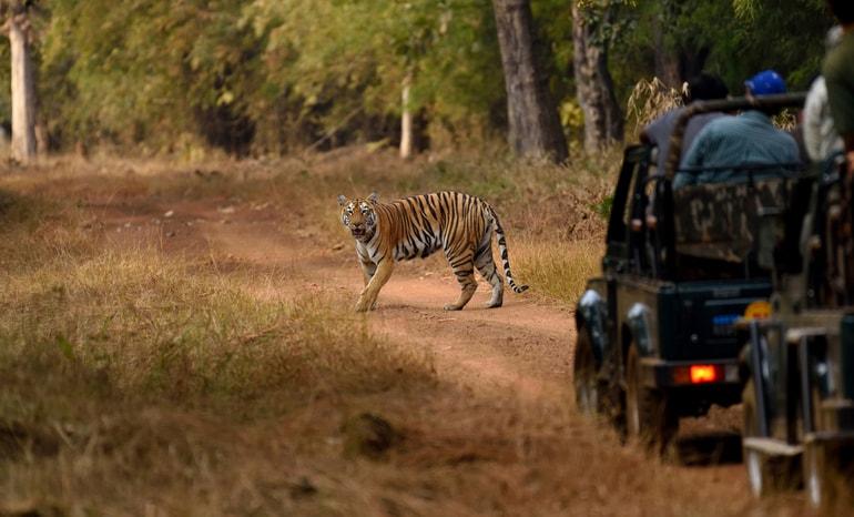 गुगामल नेशनल पार्क(मेलघाट टाइगर रिजर्व) घूमने की पूरी - Gugamal National Park (Melghat Tiger Reserve) in Hindi